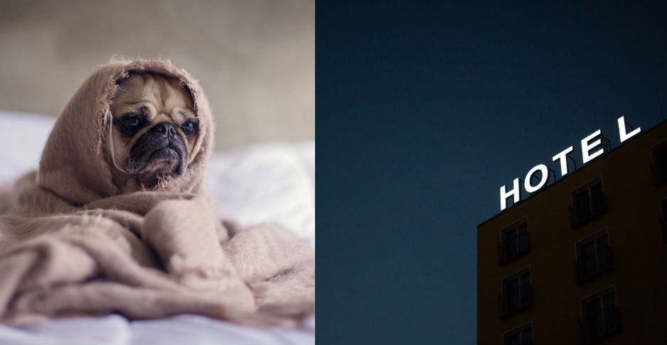 Alojamientos y viajes con mascotas